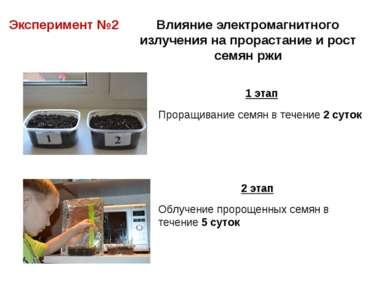 Эксперимент №2 Влияние электромагнитного излучения на прорастание и рост семя...
