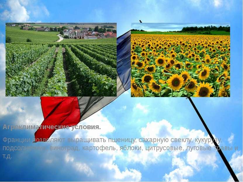Агроклиматические условия. Франции позволяют выращивать пшеницу, сахарную све...