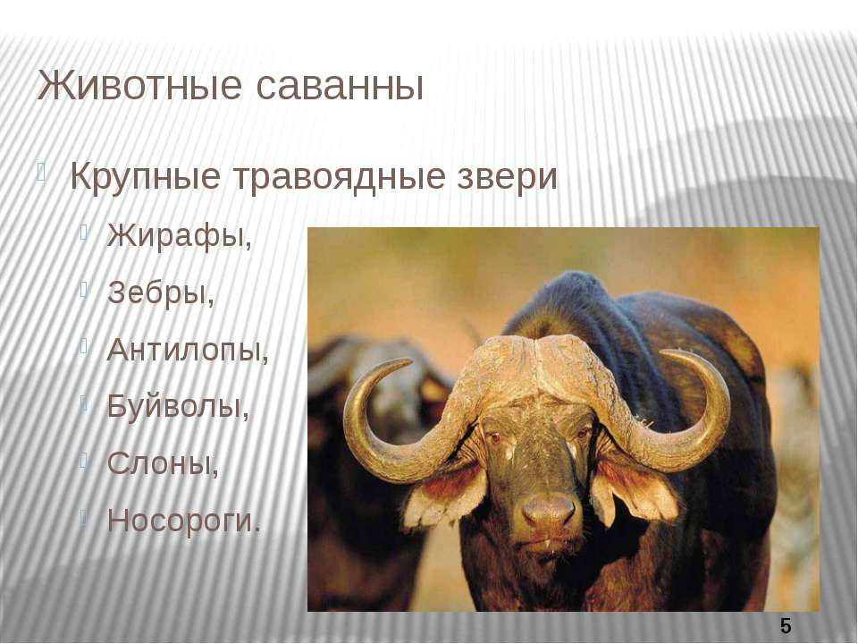 Животные саванны Крупные травоядные звери Жирафы, Зебры, Антилопы, Буйволы, С...