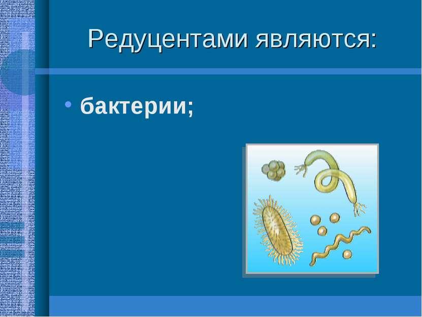 Редуцентами являются: бактерии;