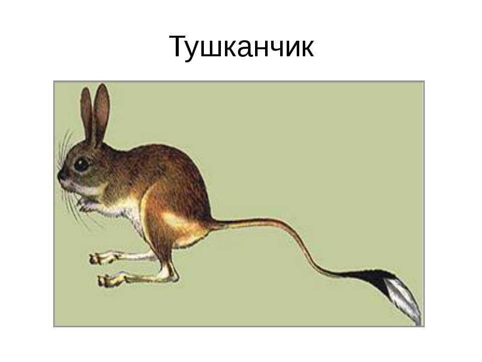 Тушканчик