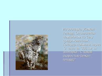 Из зоопарка убежал гепард. Он является чемпионом по бегу среди животных. Гепа...