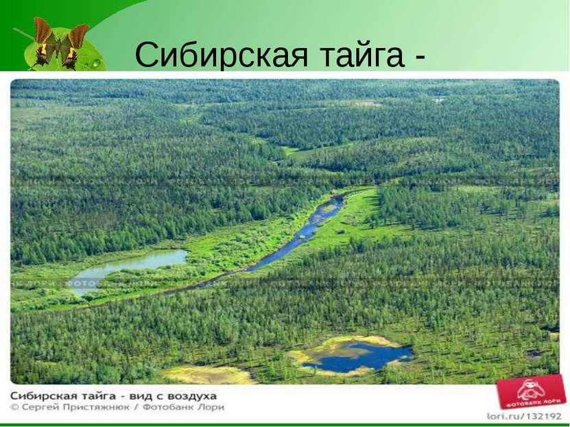 Сибирская тайга -