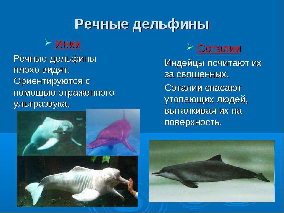 Речные дельфины Инии Речные дельфины плохо видят. Ориентируются с помощью отр...