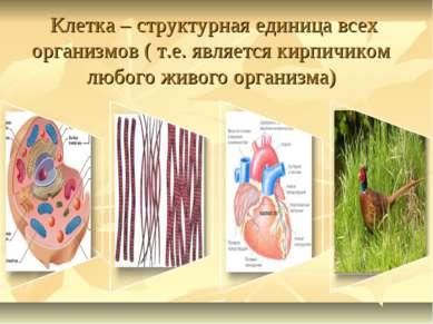 Клетка – структурная единица всех организмов ( т.е. является кирпичиком любог...