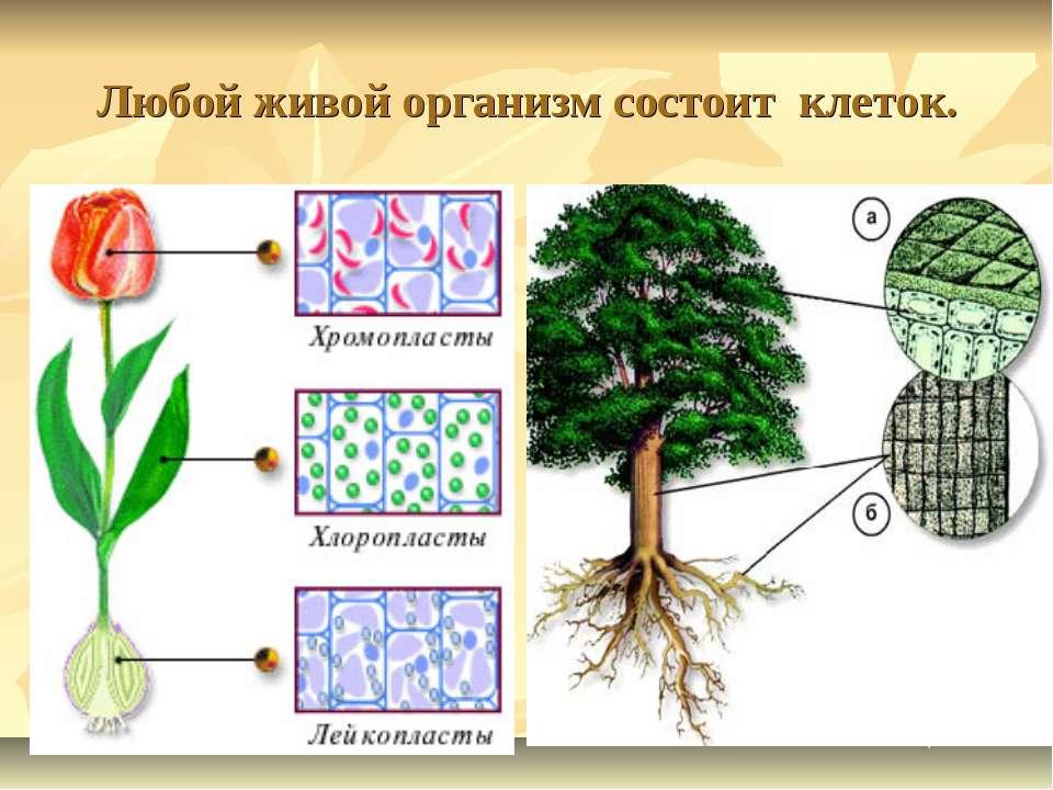 Любой живой организм состоит клеток.