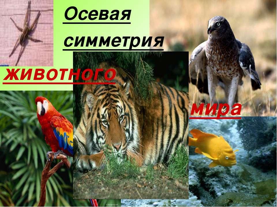Осевая симметрия животного мира