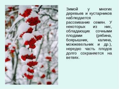 Зимой у многих деревьев и кустарников наблюдается рассеивание семян. У некото...
