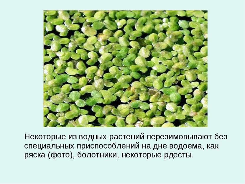 Некоторые из водных растений перезимовывают без специальных приспособлений на...