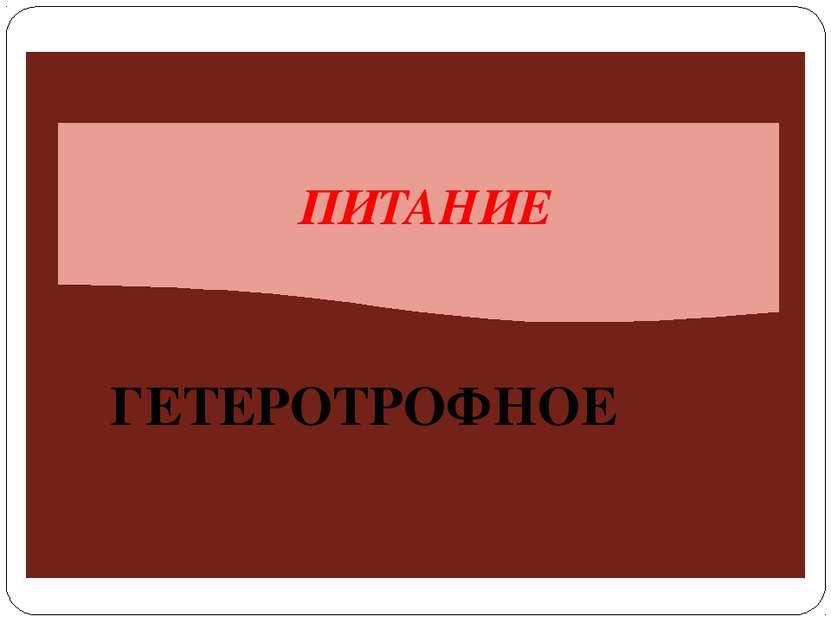 ПИТАНИЕ ГЕТЕРОТРОФНОЕ