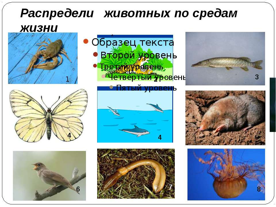 Распредели животных по средам жизни 6 7 8 1 2 3 4 4 5