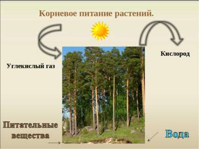 Корневое питание растений. Углекислый газ Кислород