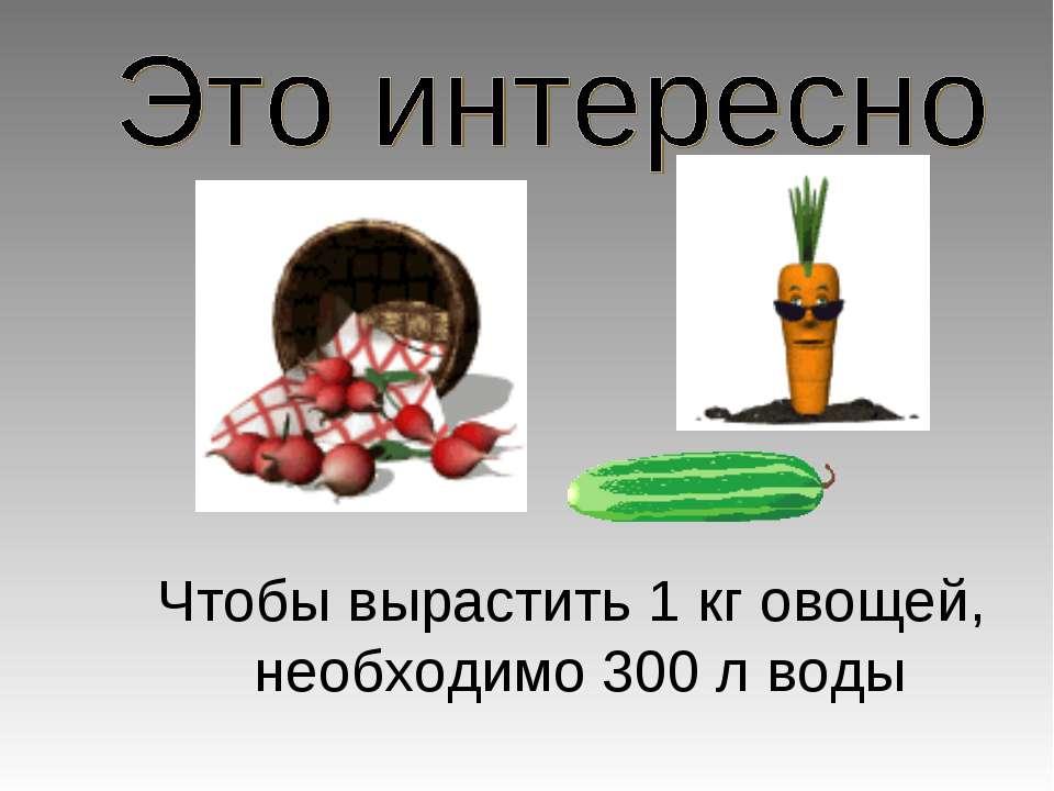 Чтобы вырастить 1 кг овощей, необходимо 300 л воды