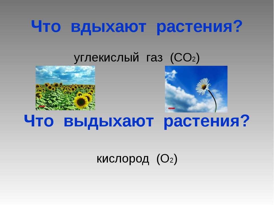 Что вдыхают растения? углекислый газ (СО2) Что выдыхают растения? кислород (О2)