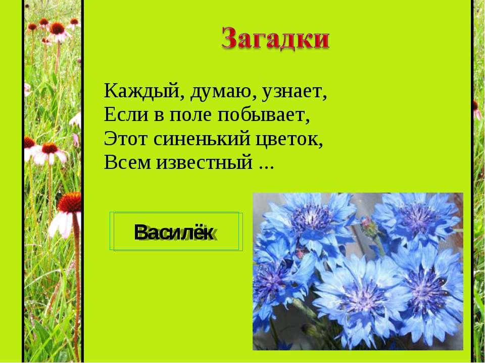Каждый, думаю, узнает, Если в поле побывает, Этот синенький цветок, Всем изве...