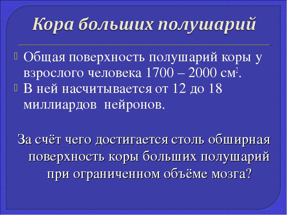 Общая поверхность полушарий коры у взрослого человека 1700 – 2000 см2. В ней ...