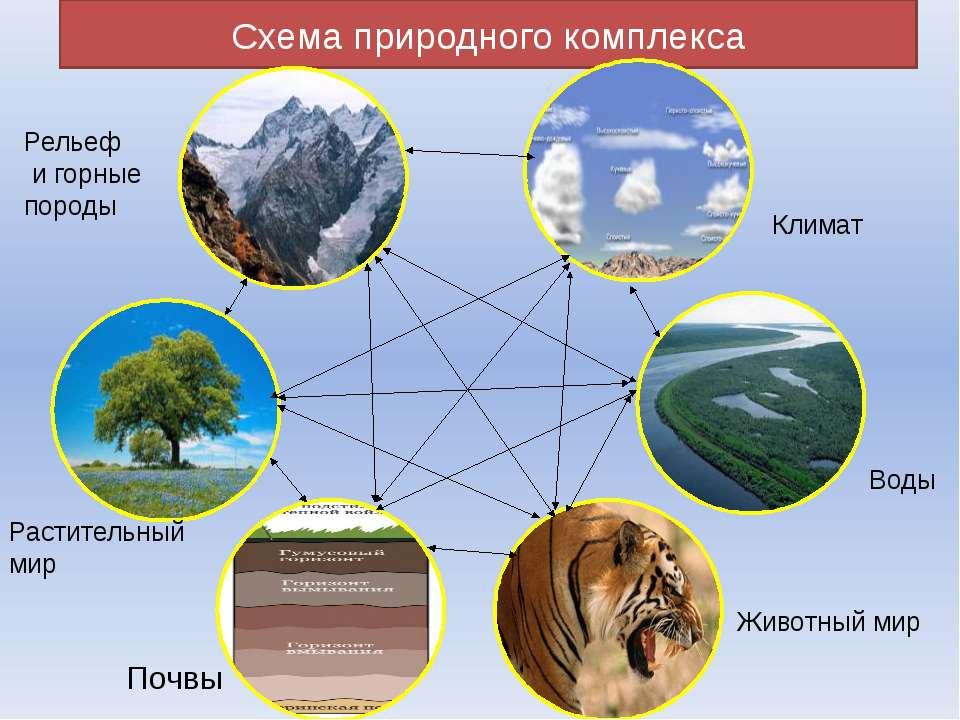 Схема природного комплекса Климат Воды Животный мир Почвы Растительный мир Ре...