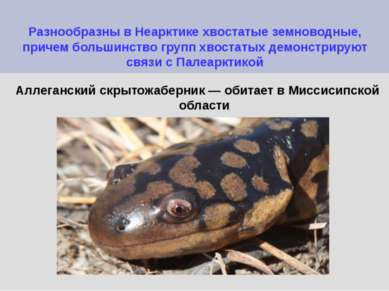Разнообразны в Неарктике хвостатые земноводные, причем большинство групп хвос...