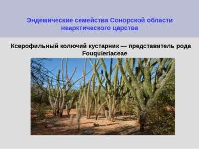 Эндемические семейства Сонорской области неарктического царства Ксерофильный ...