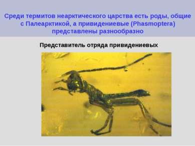 Среди термитов неарктического царства есть роды, общие с Палеарктикой, а прив...