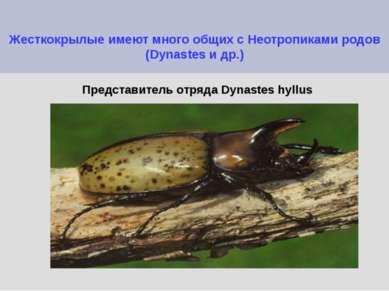 Жесткокрылые имеют много общих с Неотропиками родов (Dynastes и др.) Представ...