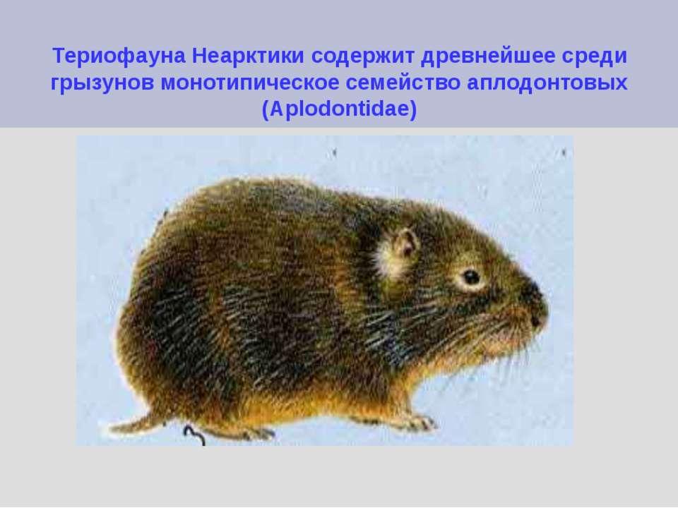 Териофауна Неарктики содержит древнейшее среди грызунов монотипическое семейс...