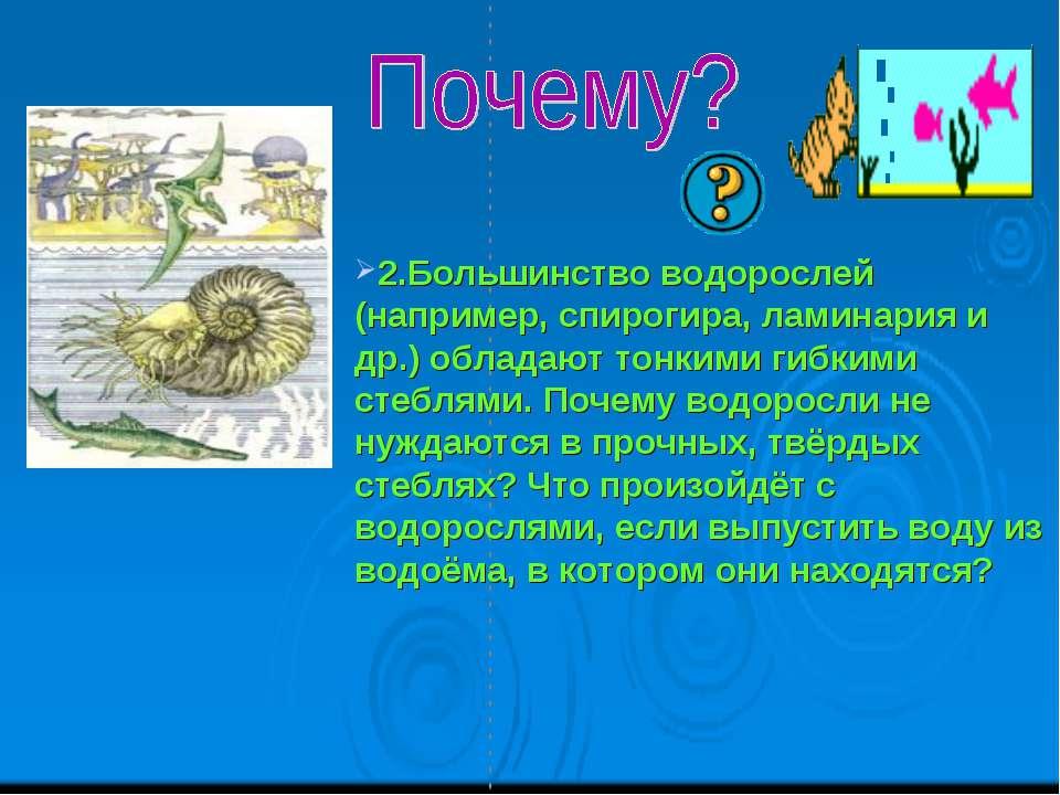 2.Большинство водорослей (например, спирогира, ламинария и др.) обладают тонк...