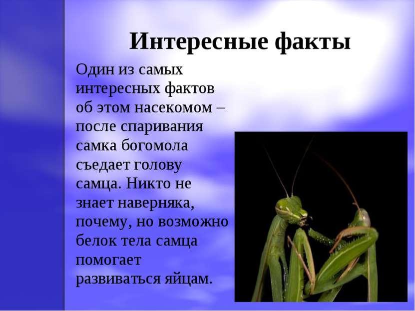 Интересные факты Один из самых интересных фактов об этом насекомом – после сп...