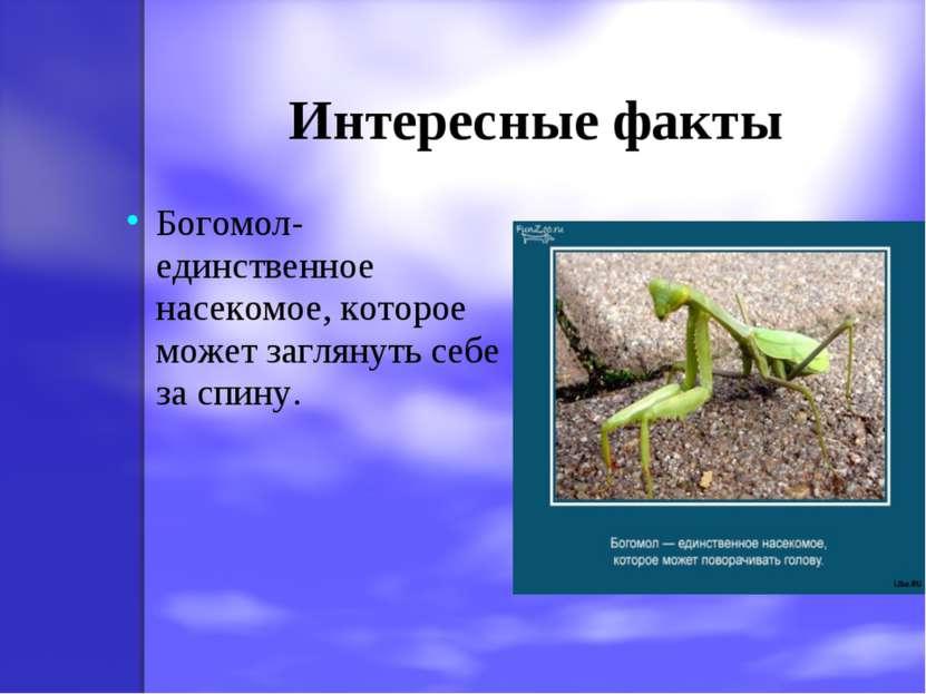 Интересные факты Богомол-единственное насекомое, которое может заглянуть себе...