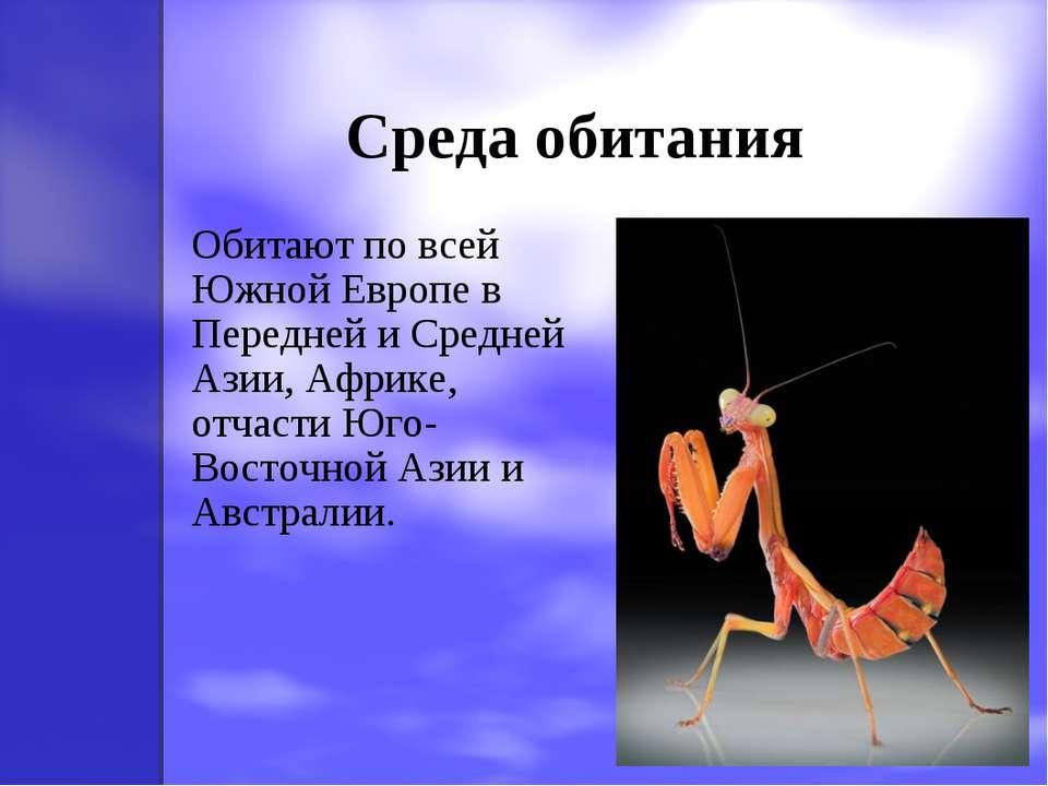 Среда обитания Обитают по всей Южной Европе в Передней и Средней Азии, Африке...