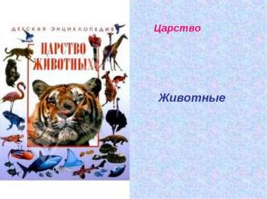 Царство Животные