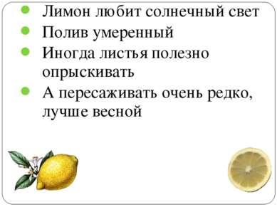 Лимон любит солнечный свет Полив умеренный Иногда листья полезно опрыскивать ...