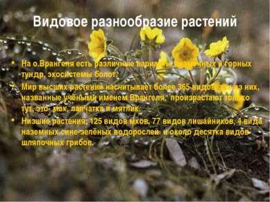 Видовое разнообразие растений На о.Врангеля есть различные варианты низменных...