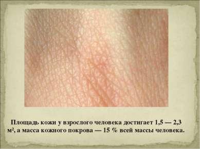 Площадь кожи у взрослого человека достигает 1,5— 2,3 м², а масса кожного пок...