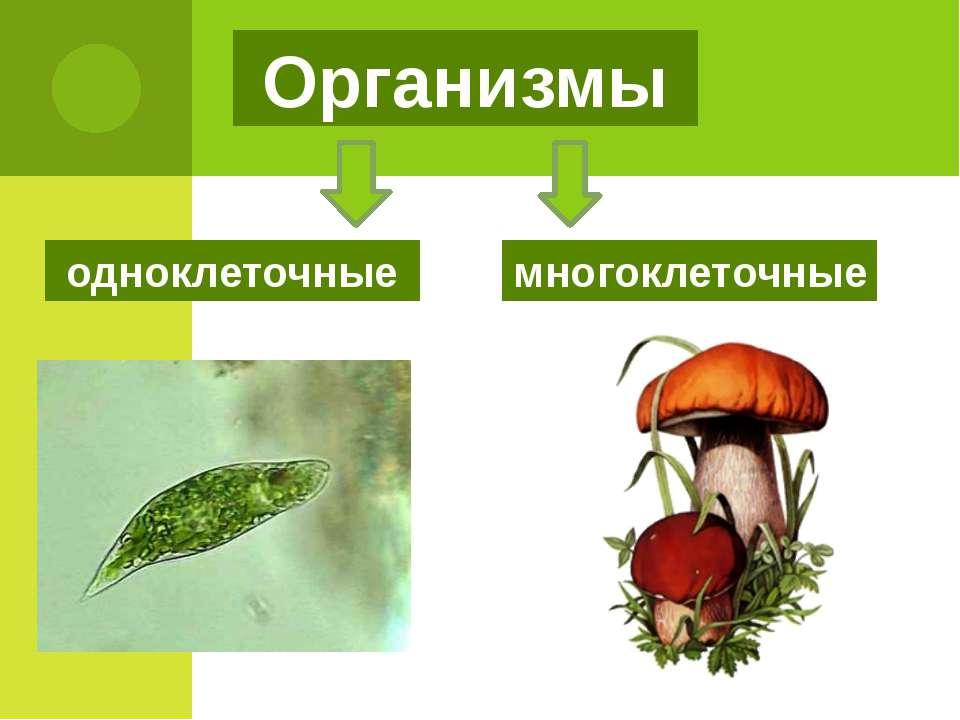 одноклеточные многоклеточные Организмы