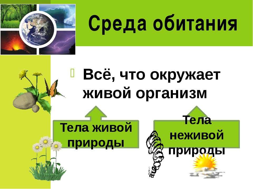 Среда обитания Всё, что окружает живой организм Тела живой природы Тела нежив...