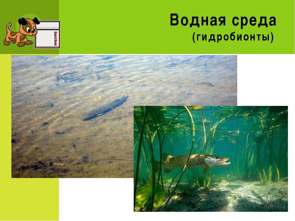 Водная среда (гидробионты)