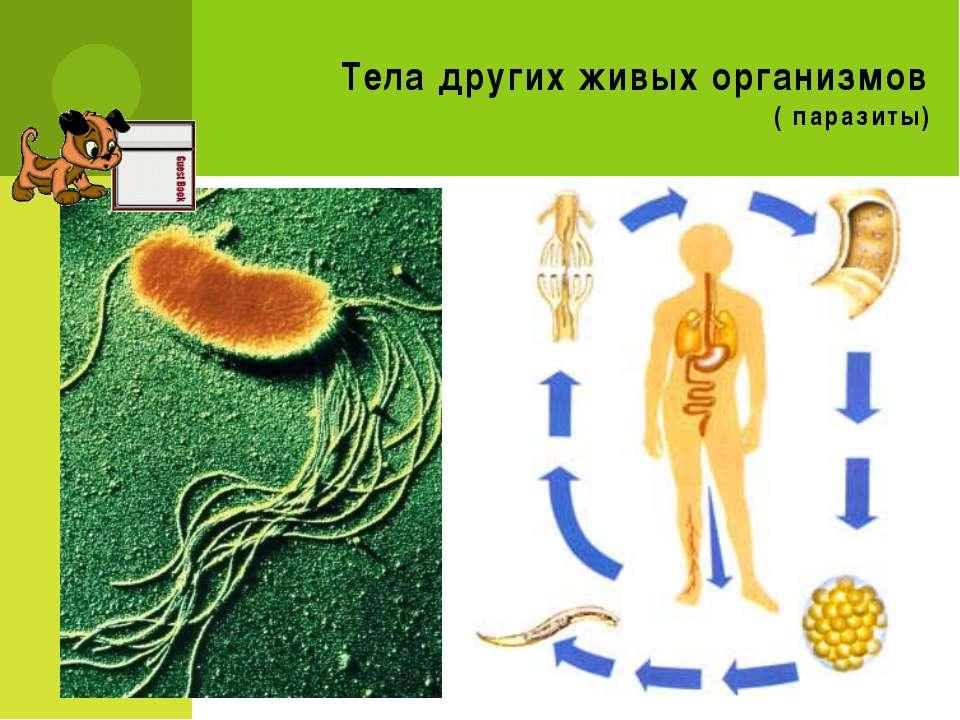 Тела других живых организмов ( паразиты)