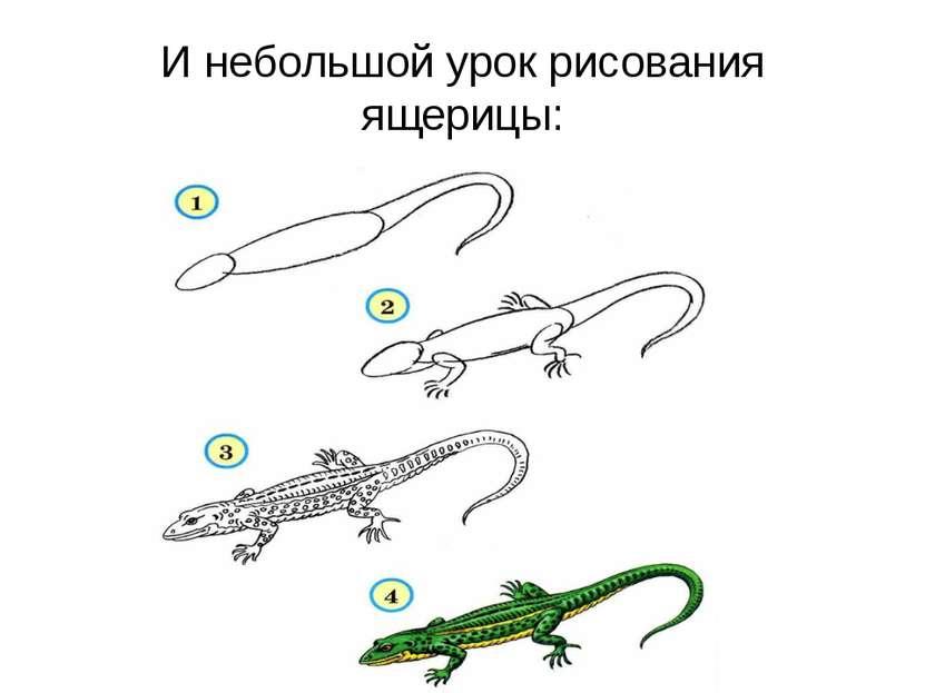 И небольшой урок рисования ящерицы: