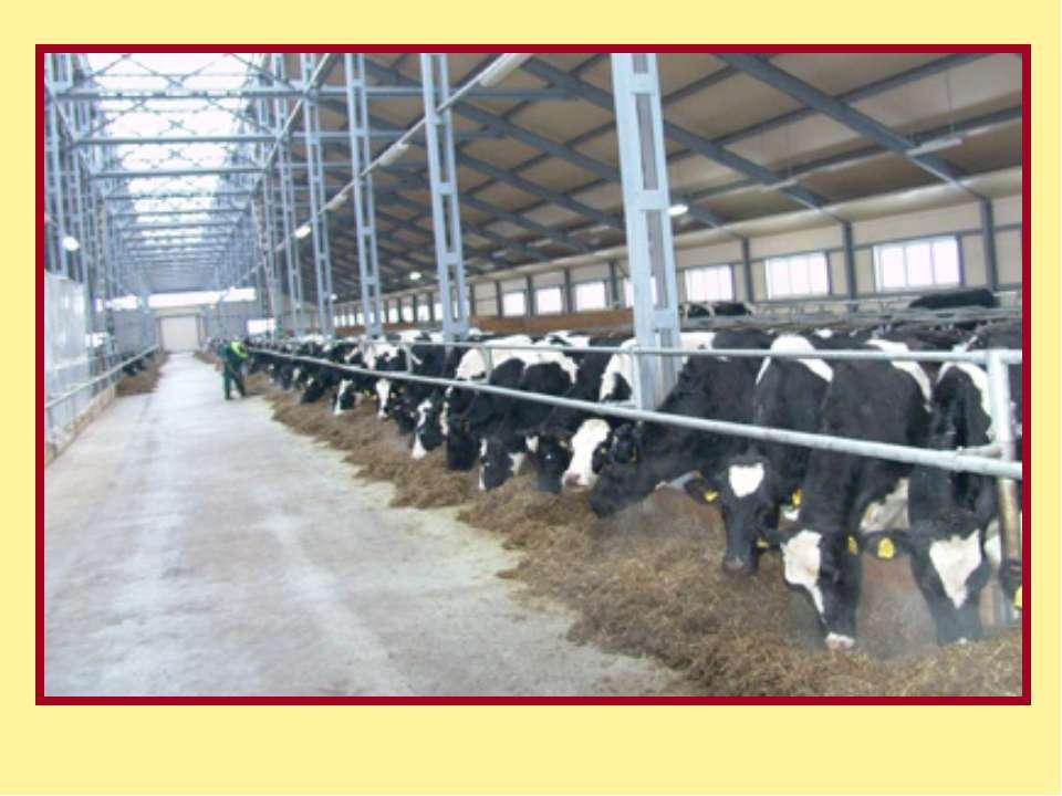 Разведение мелкого рогатого скота тонкорунные молочные пуховые породы :
