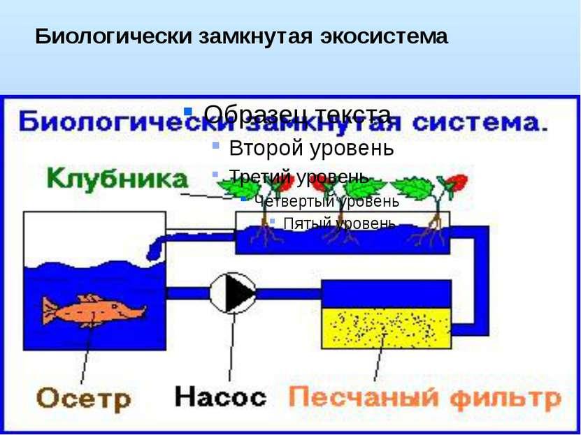 Биологически замкнутая экосистема