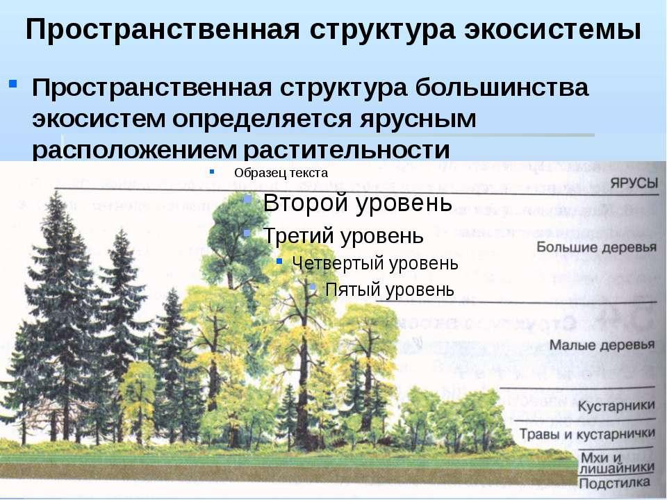 Пространственная структура экосистемы Пространственная структура большинства ...