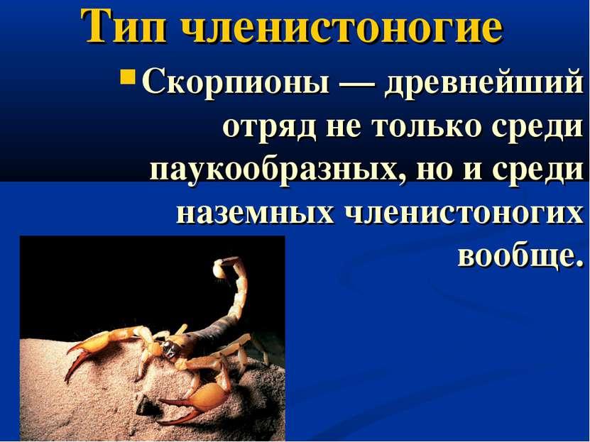 Тип членистоногие Скорпионы — древнейший отряд не только среди паукообразных,...