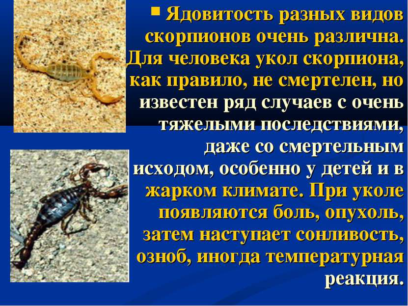 Ядовитость разных видов скорпионов очень различна. Для человека укол скорпион...