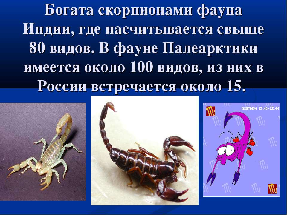 Богата скорпионами фауна Индии, где насчитывается свыше 80 видов. В фауне Пал...