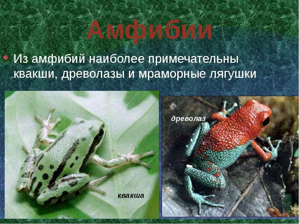 Амфибии Из амфибий наиболее примечательны квакши, древолазы и мраморные лягуш...