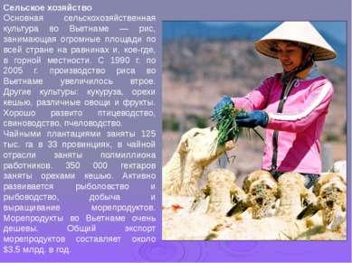 Сельское хозяйство Основная сельскохозяйственная культура во Вьетнаме — рис, ...