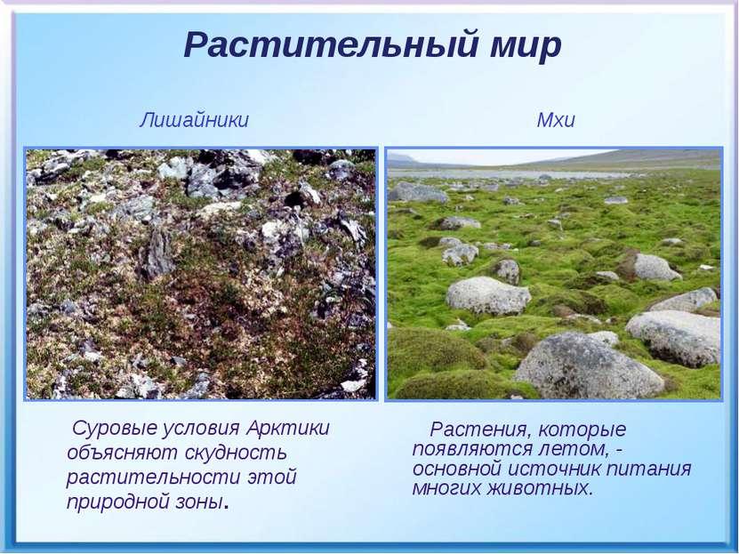 Растения, которые появляются летом, - основной источник питания многих животн...