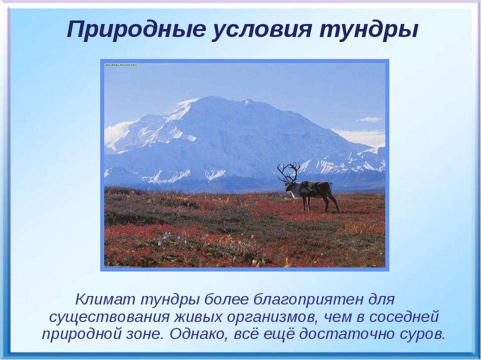 Климат тундры более благоприятен для существования живых организмов, чем в со...
