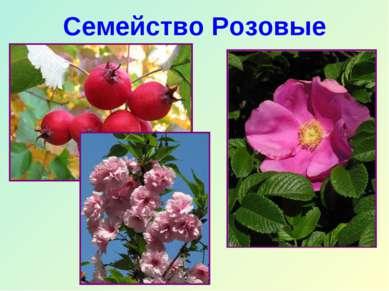 Семейство Розовые
